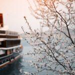 How To Book a Rhine River Cruise
